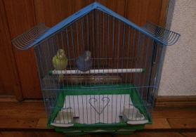 Qefes ve Papuqay