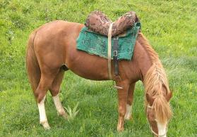Atlar satışı at
