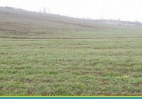 Quab Rayonu  Alpan Kəndi   210 sot  torpaqa  sahəsi  staılır
