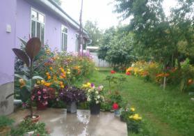 Qebele rayonu Vendam Qesebesinde kirayə ev