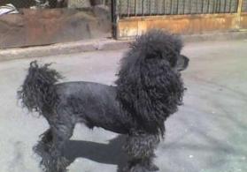 Продаю собаку. it Satiram