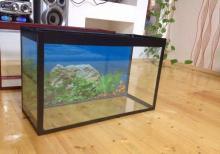 akvarium teze 33 litre