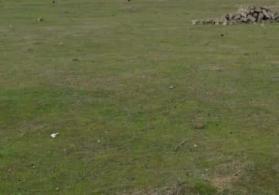 Quba rayonu Barli kendi 6 sot torpaq
