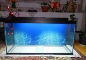 325 litrelik akvarium teze yiqilip 1 sm wuwesinin