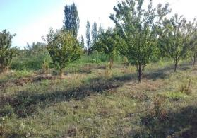 Xacmazda torpaq 4-5 hektar