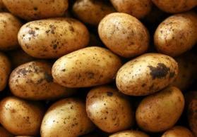 Susay Kartofu