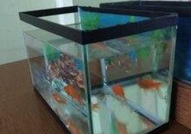 Akvarium ve balıqlar