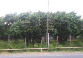 Balakən rayonu 13 sotluq fındıq bağı