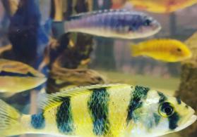KARDİNAL akvarium merkezi