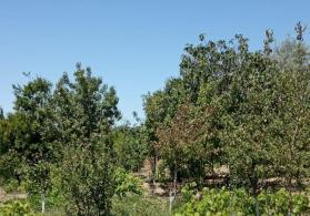 Super ağacı bag