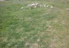 Quba rayonu Bagbanli qəsəbəsində 6 sot torpağımi satıram