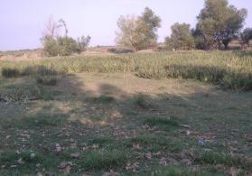 Bərdə rayonu İmam gulu kəndi