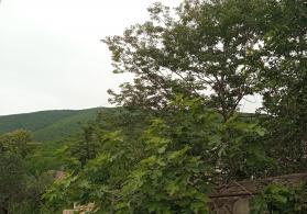 Qədim səfalı istirahət turizm şəhəri Şəki şəhərində tamtəmirli həyət evi satılır