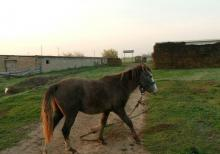 at satıram